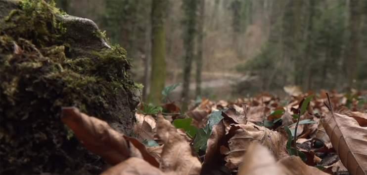 Die Leiche der jungen Frau wurde in einem Waldstück in Zezikon gefunden. (Symbolbild: TELE TOP)