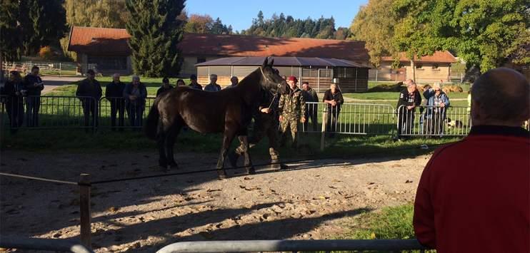 Zweite Versteigerung der Pferde von Hefenhofen (Bild: RADIO TOP/Michel Eggimann)