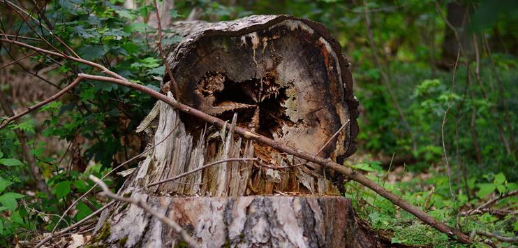 Die meisten Schadensmeldungen gingen wegen eingeknickter Bäume ein. (Symbolbild: pixabay.com)